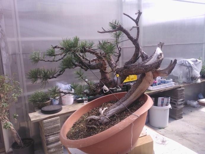 treestyler_6